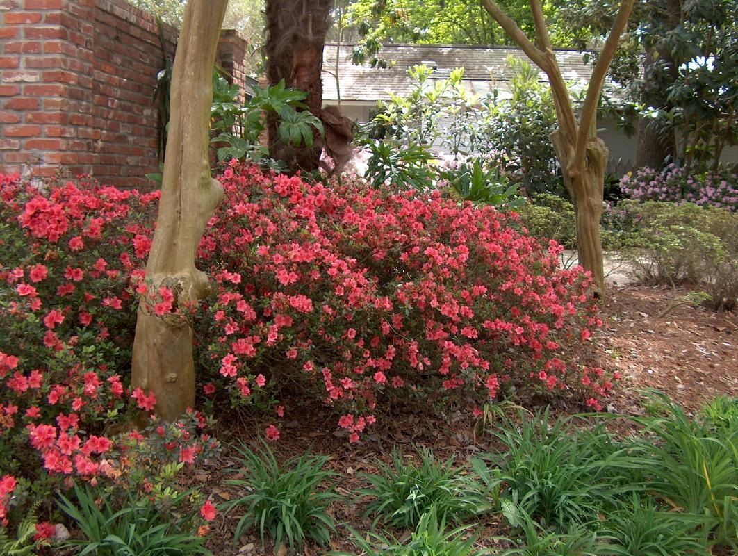Woodland Gardens - neoTerra